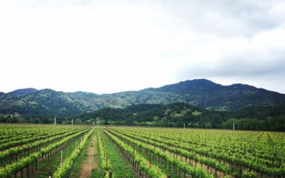 Tips To Have The Best Day Wine Tasting