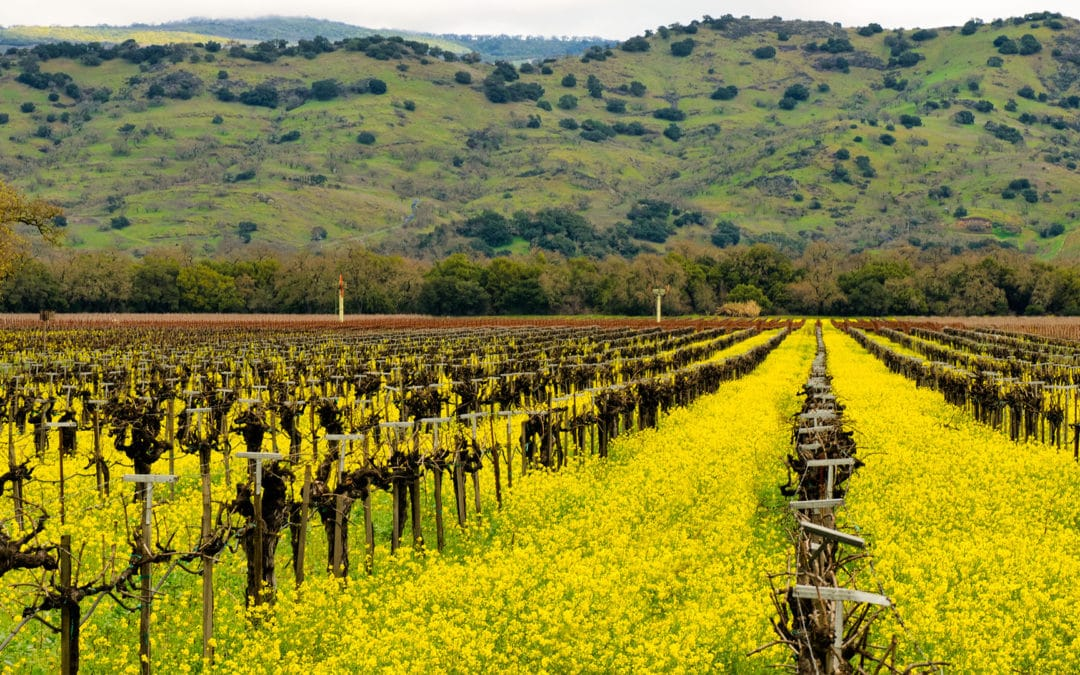 January Events in Yountville