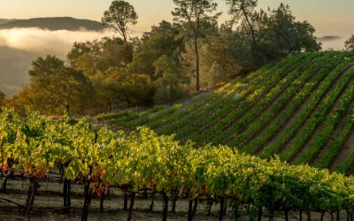Industry Partners Rally to Support the Napa Valley's Second Largest Industry